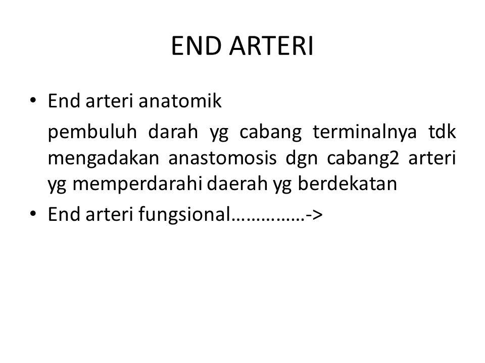 END ARTERI End arteri anatomik pembuluh darah yg cabang terminalnya tdk mengadakan anastomosis dgn cabang2 arteri yg memperdarahi daerah yg berdekatan
