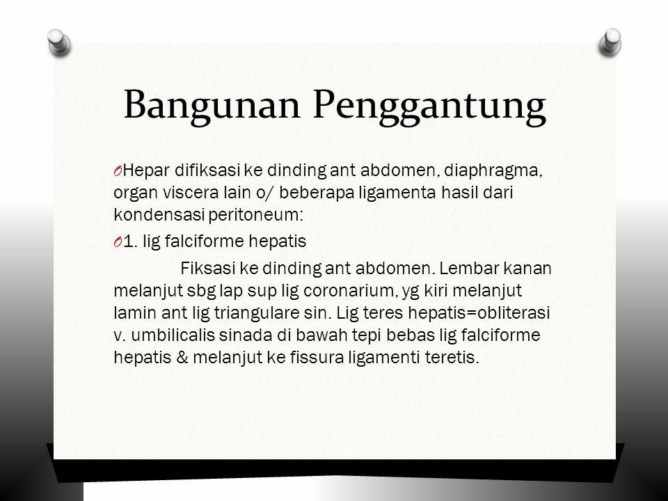 Bangunan Penggantung O Hepar difiksasi ke dinding ant abdomen, diaphragma, organ viscera lain o/ beberapa ligamenta hasil dari kondensasi peritoneum: O 1.