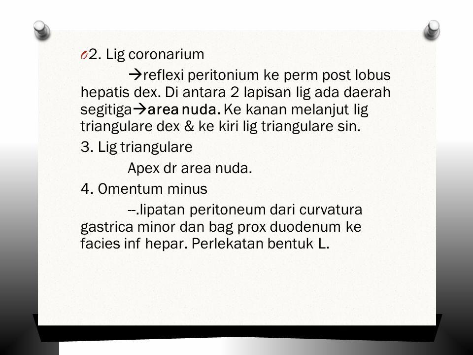 O 2.Lig coronarium  reflexi peritonium ke perm post lobus hepatis dex.