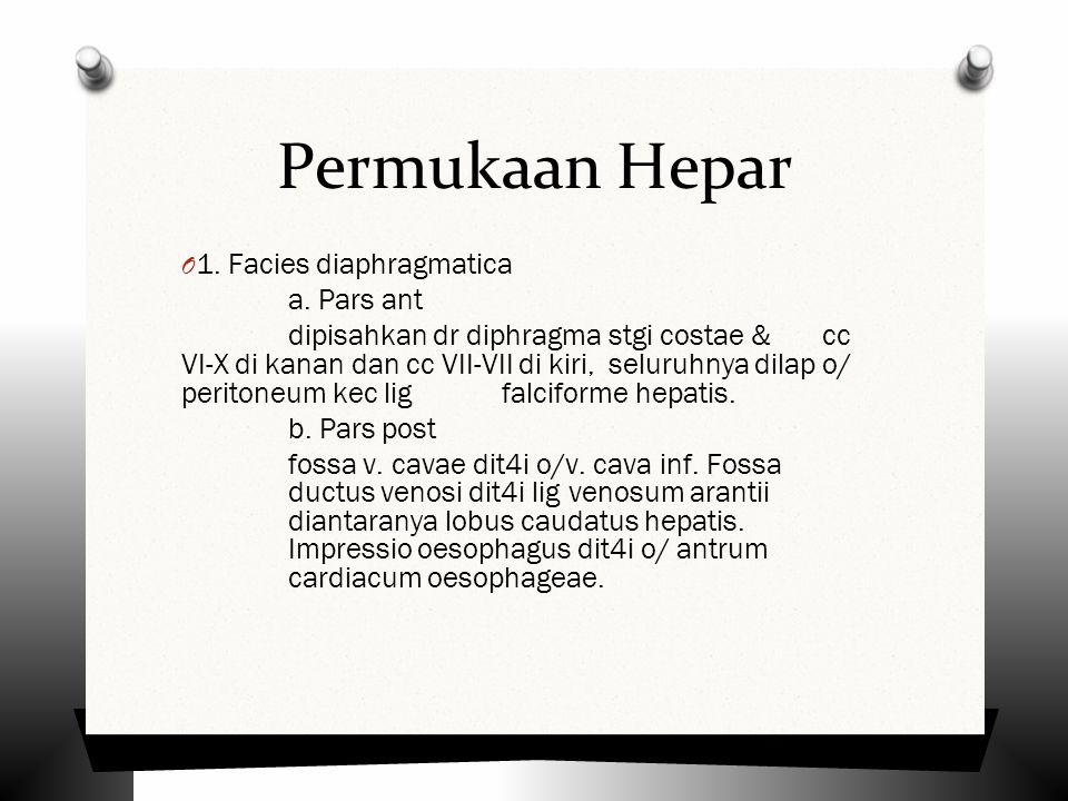 Permukaan Hepar O 1.Facies diaphragmatica a.