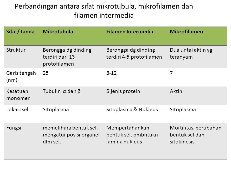 Perbandingan antara sifat mikrotubula, mikrofilamen dan filamen intermedia Sifat/ tandaMikrotubulaFilamen IntermediaMikrofilamen StrukturBerongga dg d