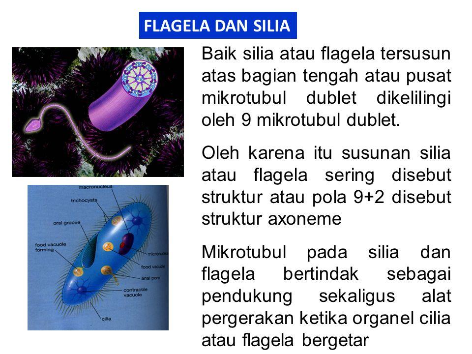 FLAGELA DAN SILIA Baik silia atau flagela tersusun atas bagian tengah atau pusat mikrotubul dublet dikelilingi oleh 9 mikrotubul dublet. Oleh karena i