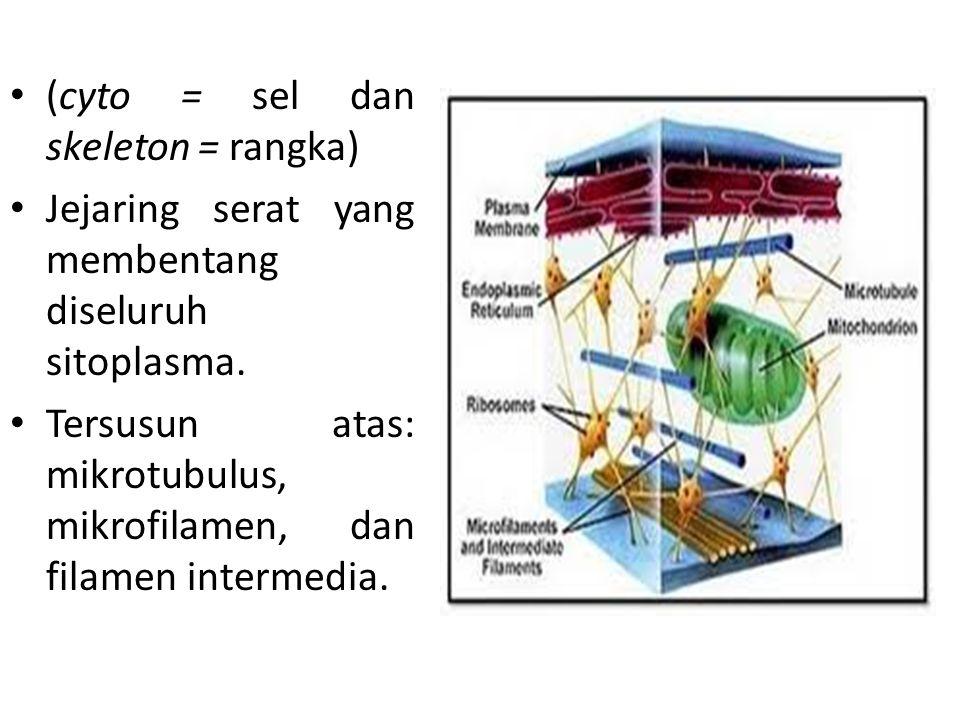 Perbandingan antara sifat mikrotubula, mikrofilamen dan filamen intermedia Sifat/ tandaMikrotubulaFilamen IntermediaMikrofilamen StrukturBerongga dg dinding terdiri dari 13 protofilamen Berongga dg dinding terdiri 4-5 protofilamen Dua untai aktin yg teranyam Garis tengah (nm) 25258-127 Kesatuan monomer Tubulin α dan β5 jenis proteinAktin Lokasi selSitoplasmaSitoplasma & NukleusSitoplasma Fungsimemelihara bentuk sel, mengatur posisi organel dlm sel.