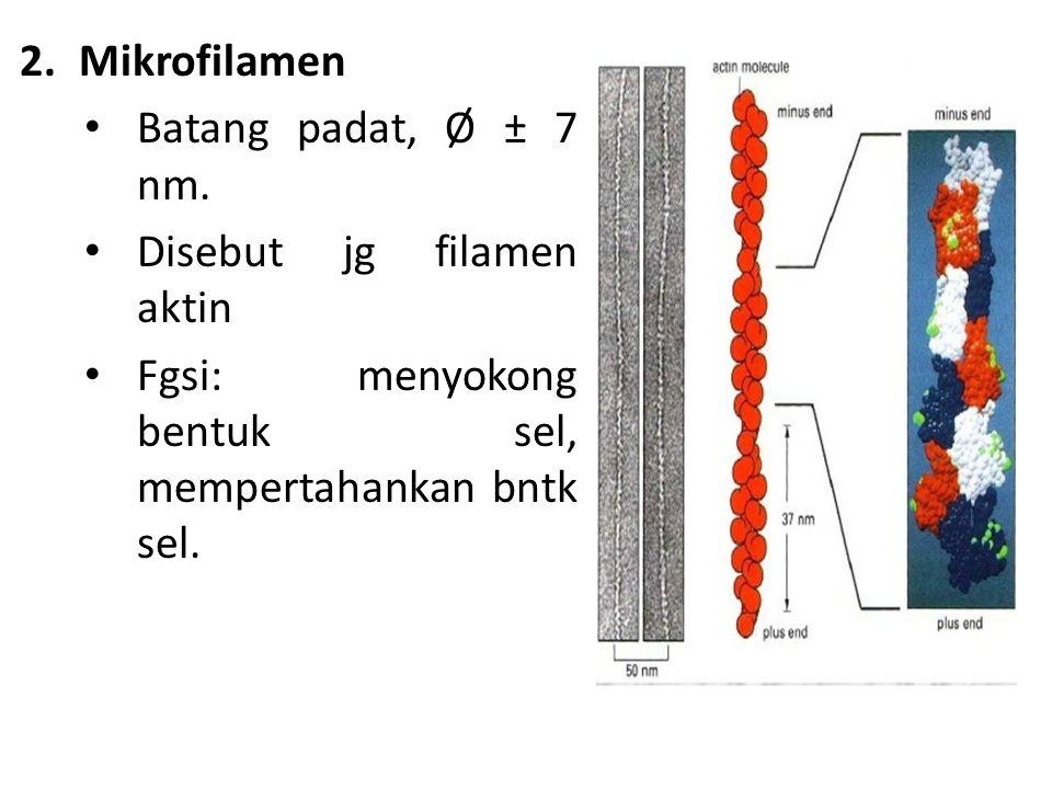 2.Mikrofilamen Batang padat, Ø ± 7 nm. Disebut jg filamen aktin Fgsi: menyokong bentuk sel, mempertahankan bntk sel.