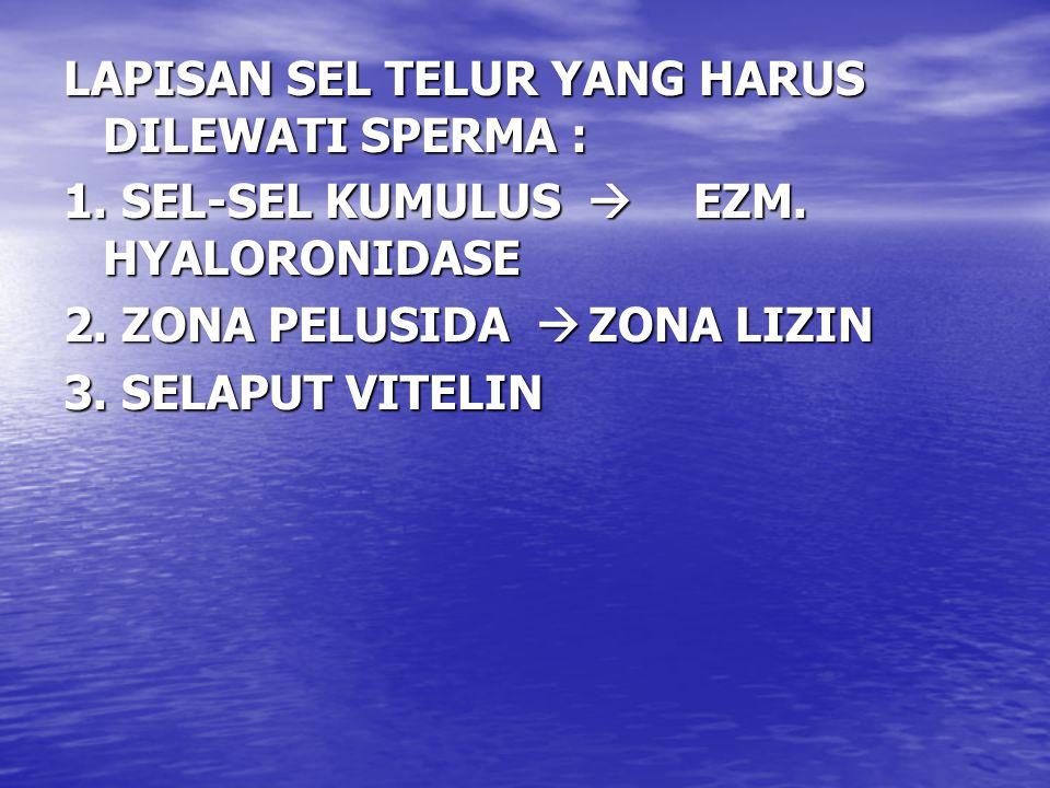 LAPISAN SEL TELUR YANG HARUS DILEWATI SPERMA : 1. SEL-SEL KUMULUS  EZM. HYALORONIDASE 2. ZONA PELUSIDA  ZONA LIZIN 3. SELAPUT VITELIN