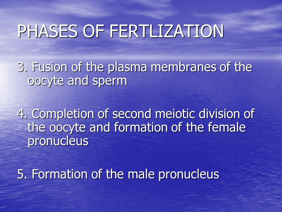 PHASES OF FERTLIZATION 3. Fusion of the plasma membranes of the oocyte and sperm 4.