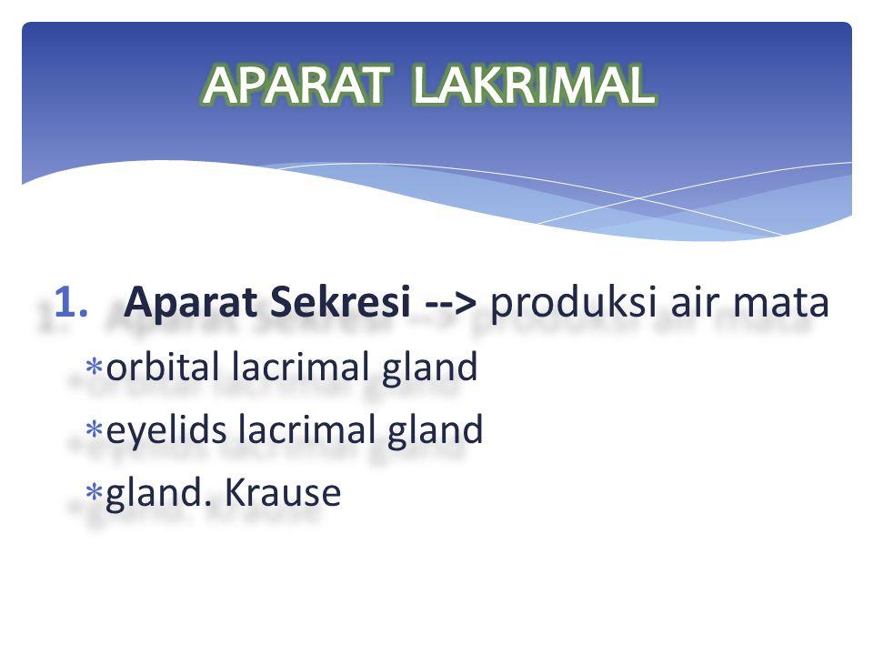 1.Aparat Sekresi --> produksi air mata  orbital lacrimal gland  eyelids lacrimal gland  gland. Krause 1.Aparat Sekresi --> produksi air mata  orbi