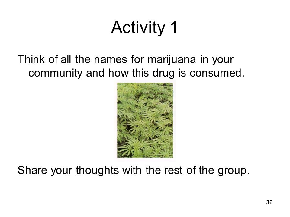 Activity 1 Think of all the names for marijuana in your community and how this drug is consumed. Share your thoughts with the rest of the group. 36