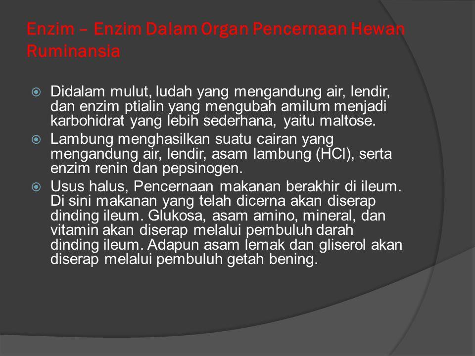 Enzim – Enzim Dalam Organ Pencernaan Hewan Ruminansia  Didalam mulut, ludah yang mengandung air, lendir, dan enzim ptialin yang mengubah amilum menja