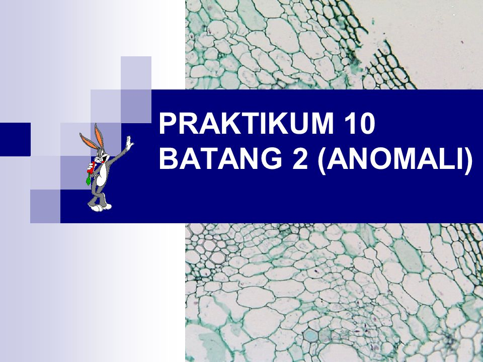 PRAKTIKUM 10 BATANG 2 (ANOMALI)