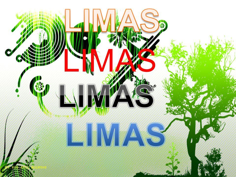 LIMAS BY: RIO ARIS NUGROHO