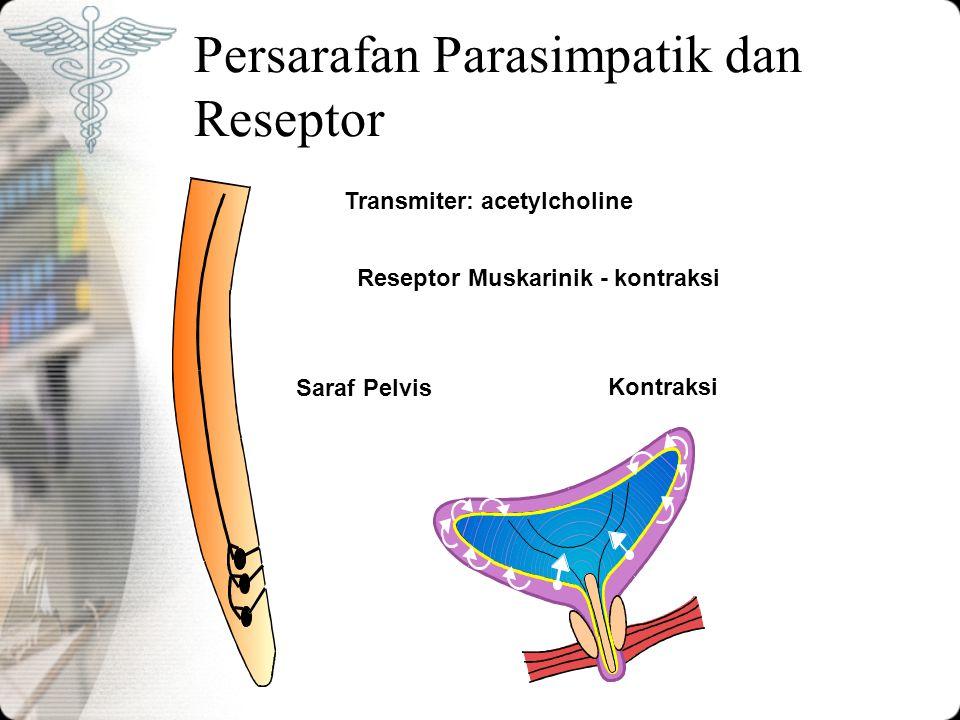 Persarafan Parasimpatik dan Reseptor Transmiter: acetylcholine Reseptor Muskarinik - kontraksi Saraf Pelvis Kontraksi