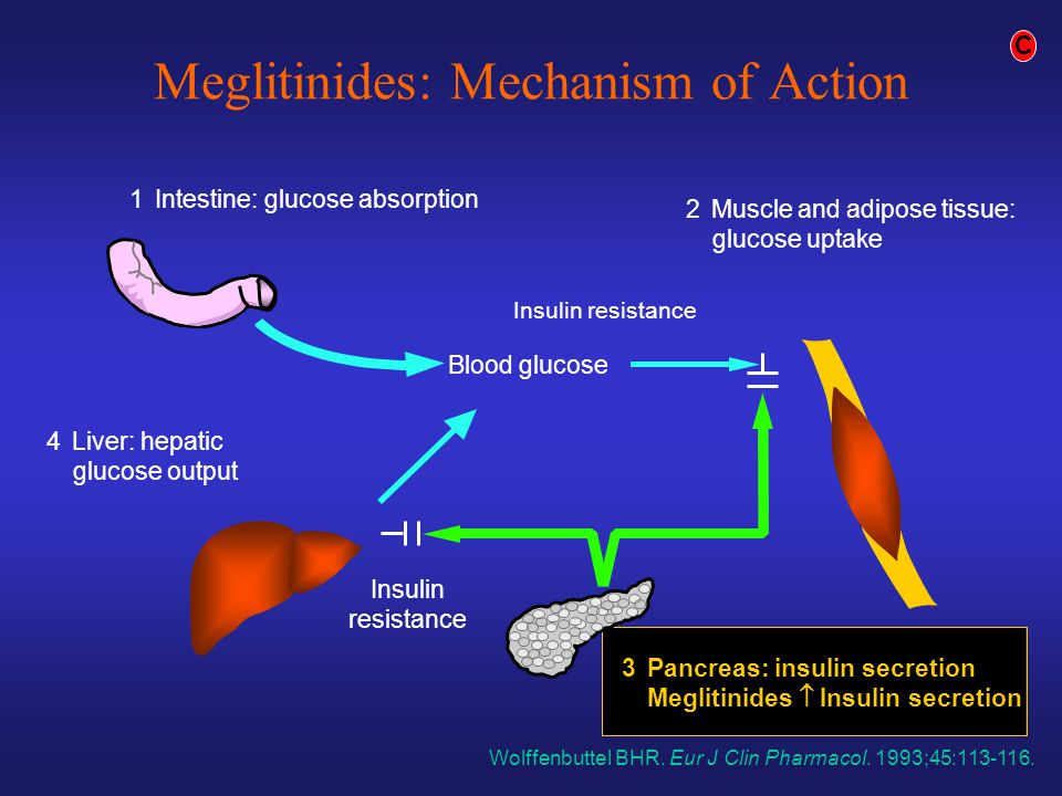 Insulin resistance Blood glucose Insulin resistance 1Intestine: glucose absorption 3Pancreas: insulin secretion Meglitinides  Insulin secretion 4Li