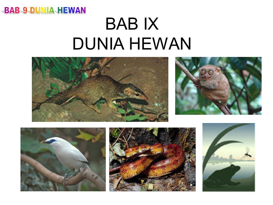 BAB IX DUNIA HEWAN