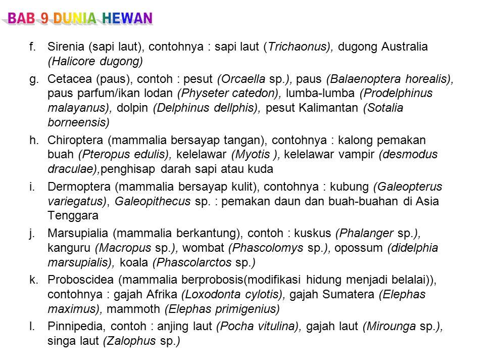 f.Sirenia (sapi laut), contohnya : sapi laut (Trichaonus), dugong Australia (Halicore dugong) g.Cetacea (paus), contoh : pesut (Orcaella sp.), paus (Balaenoptera horealis), paus parfum/ikan lodan (Physeter catedon), lumba-lumba (Prodelphinus malayanus), dolpin (Delphinus dellphis), pesut Kalimantan (Sotalia borneensis) h.Chiroptera (mammalia bersayap tangan), contohnya : kalong pemakan buah (Pteropus edulis), kelelawar (Myotis ), kelelawar vampir (desmodus draculae),penghisap darah sapi atau kuda i.Dermoptera (mammalia bersayap kulit), contohnya : kubung (Galeopterus variegatus), Galeopithecus sp.