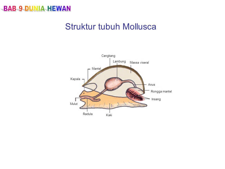 Struktur tubuh Mollusca Cangkang Lambung Massa viseral Anus Rongga mantel Insang Kaki Radula Mulut Kepala Mantel