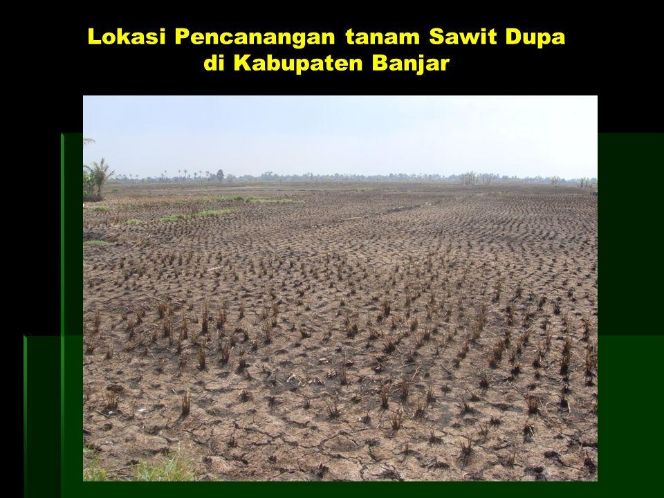 Lokasi Pencanangan tanam Sawit Dupa di Kabupaten Banjar