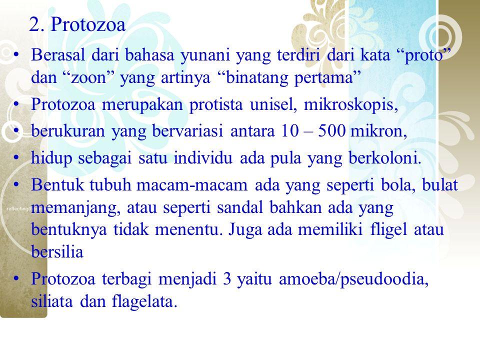 """2. Protozoa Berasal dari bahasa yunani yang terdiri dari kata """"proto"""" dan """"zoon"""" yang artinya """"binatang pertama"""" Protozoa merupakan protista unisel, m"""