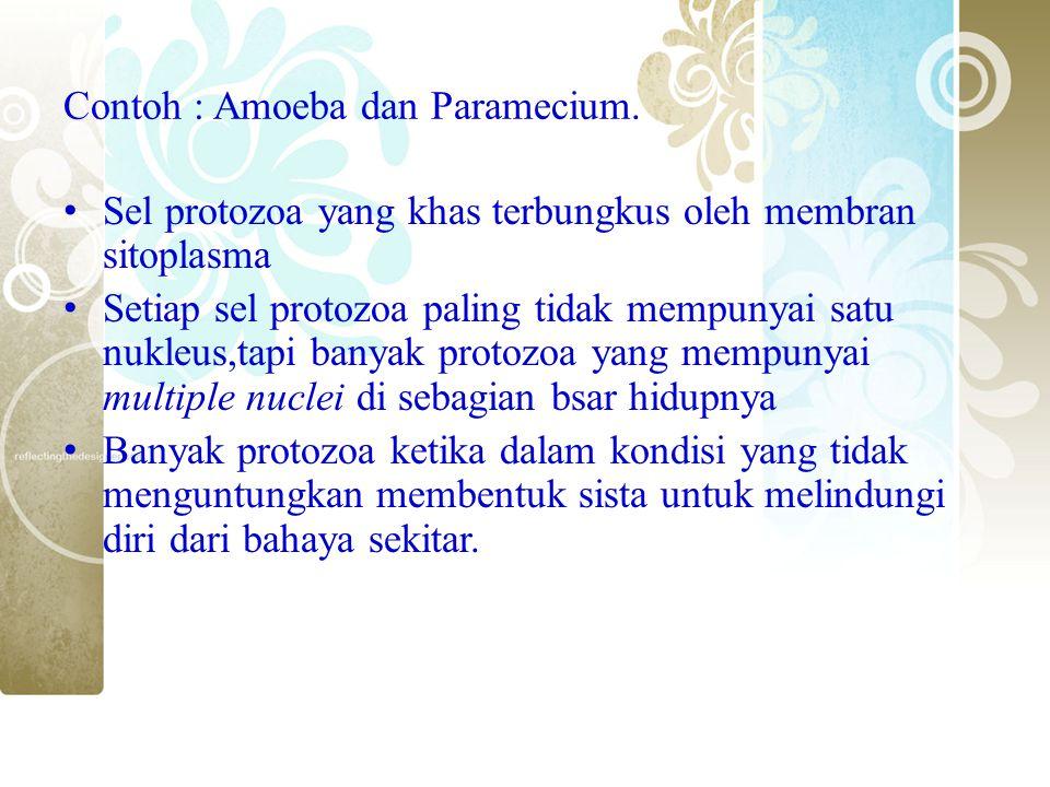 Contoh : Amoeba dan Paramecium. Sel protozoa yang khas terbungkus oleh membran sitoplasma Setiap sel protozoa paling tidak mempunyai satu nukleus,tapi