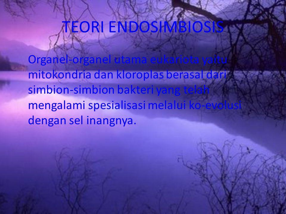 TEORI ENDOSIMBIOSIS Organel-organel utama eukariota yaitu mitokondria dan kloroplas berasal dari simbion-simbion bakteri yang telah mengalami spesiali