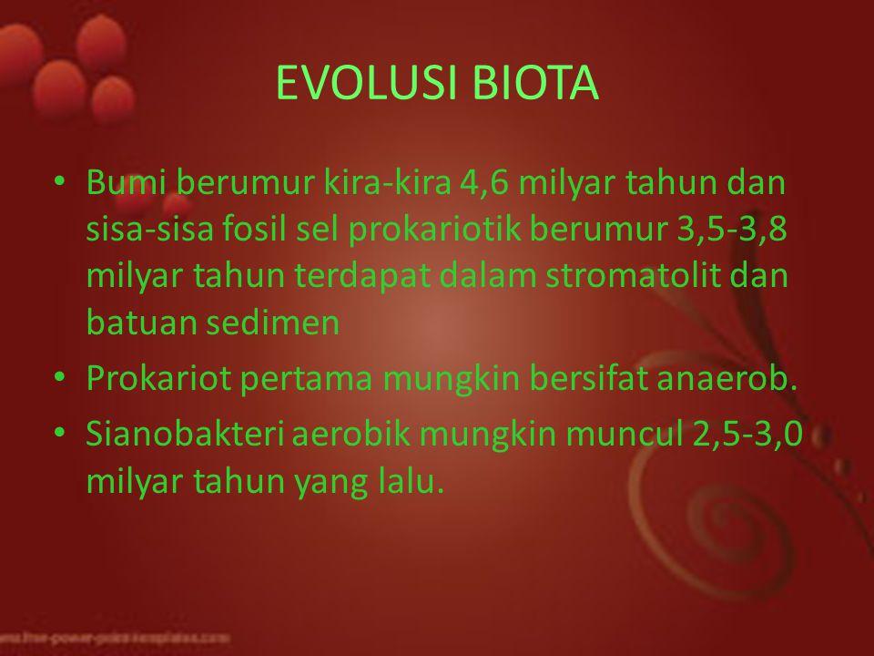 EVOLUSI BIOTA Bumi berumur kira-kira 4,6 milyar tahun dan sisa-sisa fosil sel prokariotik berumur 3,5-3,8 milyar tahun terdapat dalam stromatolit dan