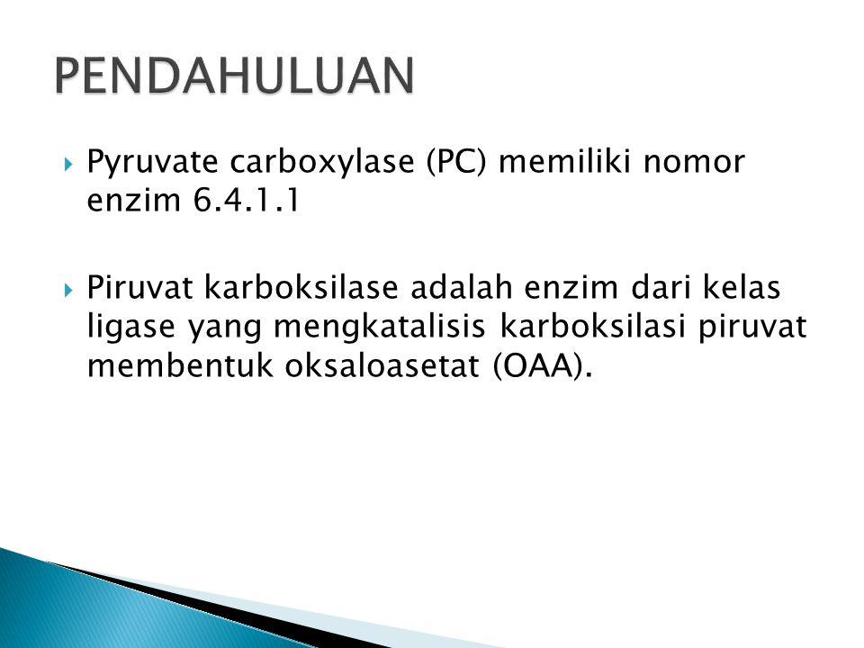  Pyruvate carboxylase (PC) memiliki nomor enzim 6.4.1.1  Piruvat karboksilase adalah enzim dari kelas ligase yang mengkatalisis karboksilasi piruvat membentuk oksaloasetat (OAA).