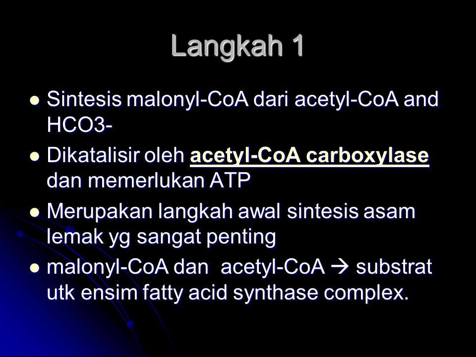 Langkah 1 Sintesis malonyl-CoA dari acetyl-CoA and HCO3- Sintesis malonyl-CoA dari acetyl-CoA and HCO3- Dikatalisir oleh acetyl-CoA carboxylase dan me