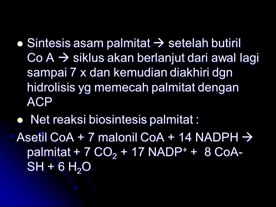 Sintesis asam palmitat  setelah butiril Co A  siklus akan berlanjut dari awal lagi sampai 7 x dan kemudian diakhiri dgn hidrolisis yg memecah palmit