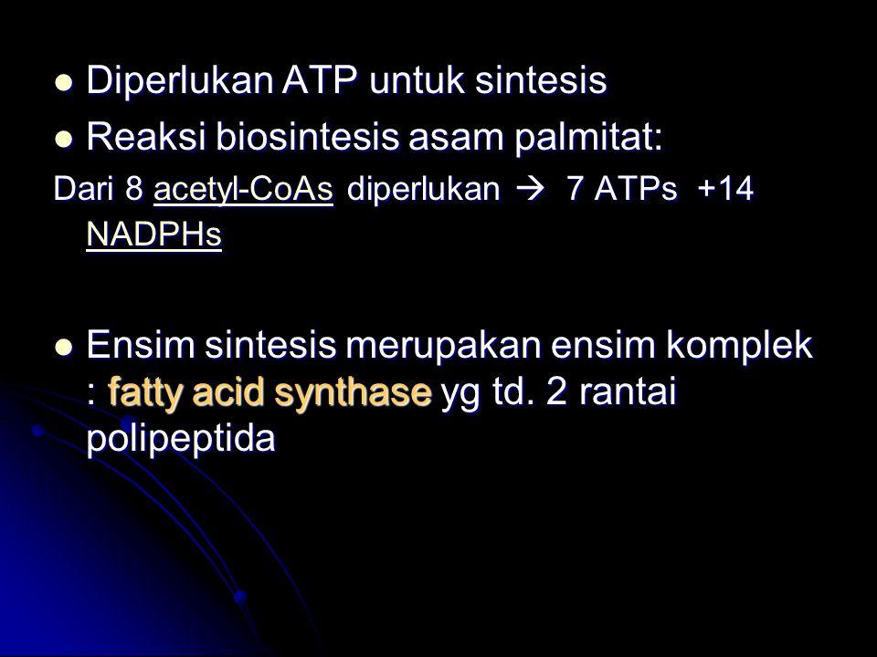 Diperlukan ATP untuk sintesis Diperlukan ATP untuk sintesis Reaksi biosintesis asam palmitat: Reaksi biosintesis asam palmitat: Dari 8 acetyl-CoAs dip