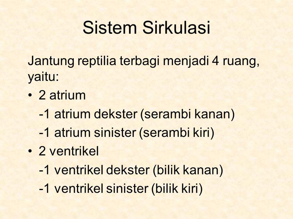 Sistem Sirkulasi Jantung reptilia terbagi menjadi 4 ruang, yaitu: 2 atrium -1 atrium dekster (serambi kanan) -1 atrium sinister (serambi kiri) 2 ventrikel -1 ventrikel dekster (bilik kanan) -1 ventrikel sinister (bilik kiri)