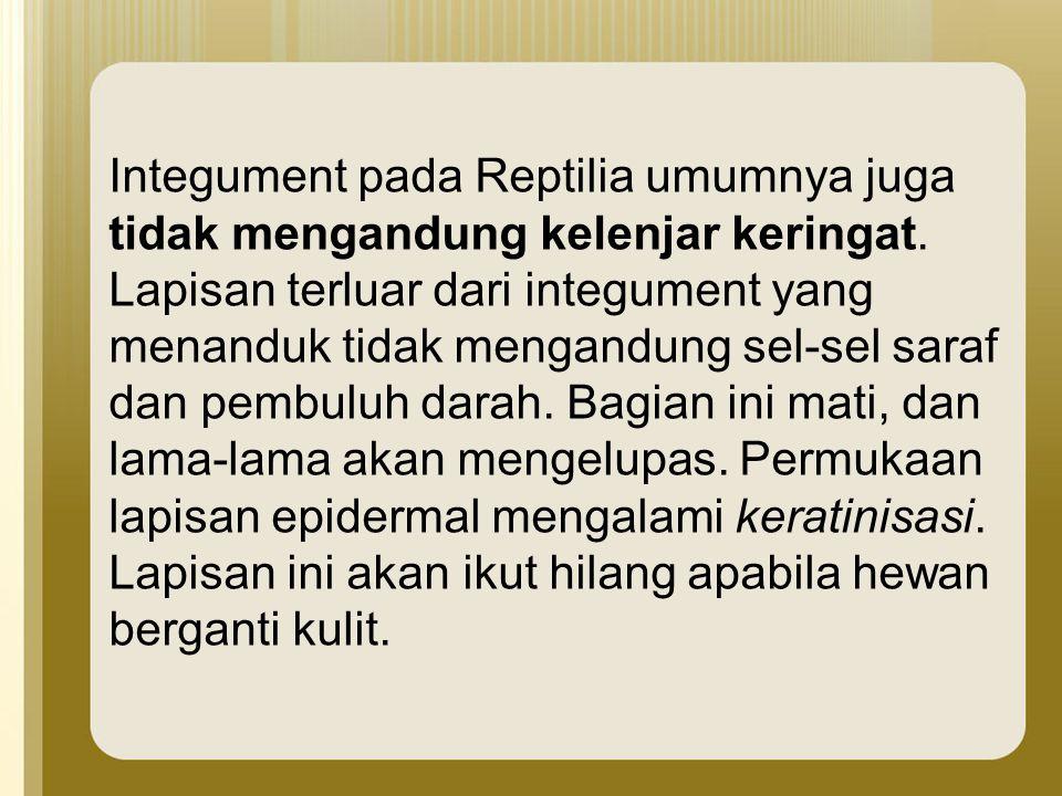 Integument pada Reptilia umumnya juga tidak mengandung kelenjar keringat.