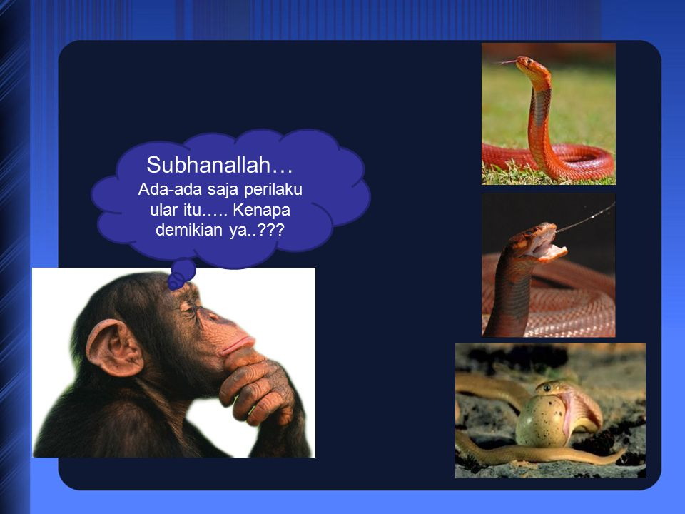 Subhanallah… Ada-ada saja perilaku ular itu….. Kenapa demikian ya..???