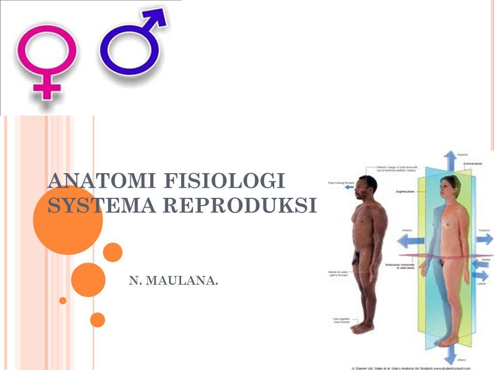 ANATOMI FISIOLOGI SYSTEMA REPRODUKSI N. MAULANA.