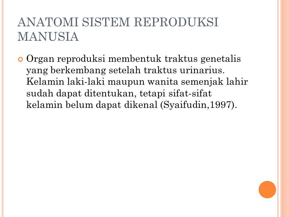 ANATOMI SISTEM REPRODUKSI MANUSIA Organ reproduksi membentuk traktus genetalis yang berkembang setelah traktus urinarius.