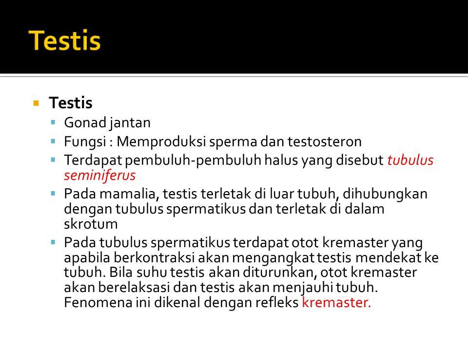 ALAT REPRODUKSI PRIA  ALAT KELAMIN DALAM a. testis b. saluran reproduksi c. kelenjar reproduksi  ALAT KELAMIN LUAR a. penis b. skrotum