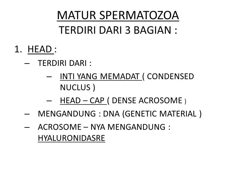 MATUR SPERMATOZOA TERDIRI DARI 3 BAGIAN : 1.HEAD : – TERDIRI DARI : – INTI YANG MEMADAT ( CONDENSED NUCLUS ) – HEAD – CAP ( DENSE ACROSOME ) – MENGAND