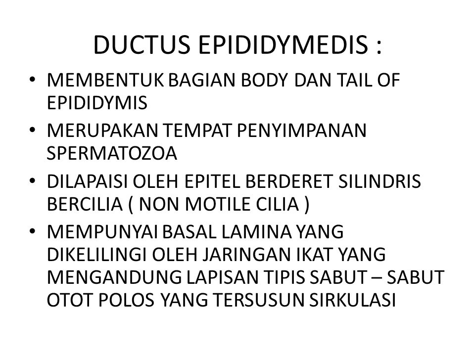 DUCTUS EPIDIDYMEDIS : MEMBENTUK BAGIAN BODY DAN TAIL OF EPIDIDYMIS MERUPAKAN TEMPAT PENYIMPANAN SPERMATOZOA DILAPAISI OLEH EPITEL BERDERET SILINDRIS B