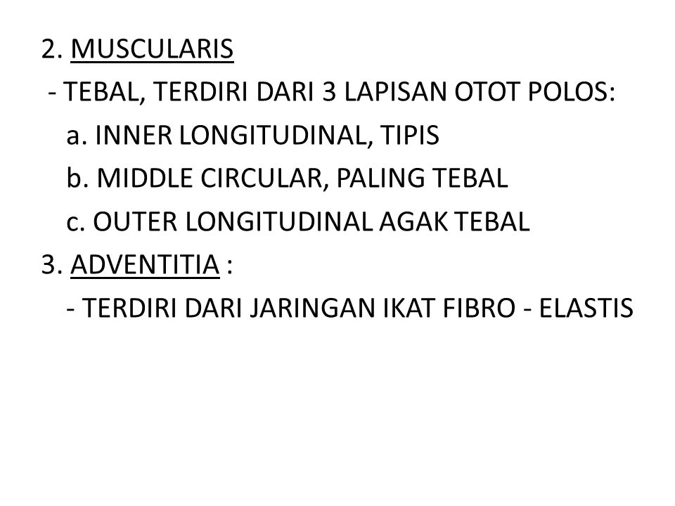 2. MUSCULARIS - TEBAL, TERDIRI DARI 3 LAPISAN OTOT POLOS: a. INNER LONGITUDINAL, TIPIS b. MIDDLE CIRCULAR, PALING TEBAL c. OUTER LONGITUDINAL AGAK TEB