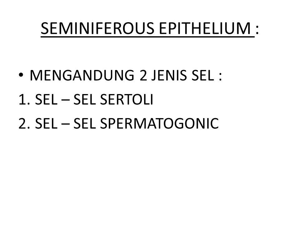 SEMINIFEROUS EPITHELIUM : MENGANDUNG 2 JENIS SEL : 1.SEL – SEL SERTOLI 2.SEL – SEL SPERMATOGONIC