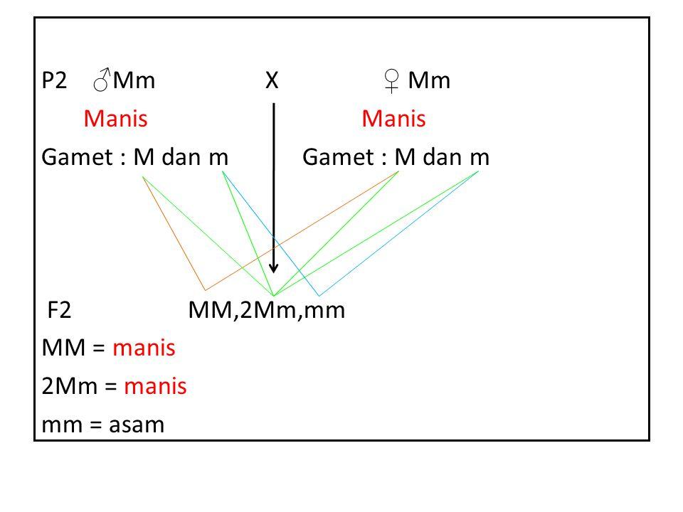 P2 ♂ Mm X ♀ Mm Manis Manis Gamet : M dan m F2 MM,2Mm,mm MM = manis 2Mm = manis mm = asam
