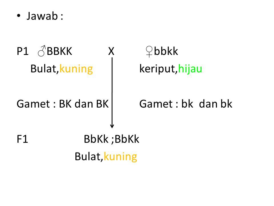 Jawab : P1 ♂ BBKK X ♀ bbkk Bulat,kuning keriput,hijau Gamet : BK dan BK Gamet : bk dan bk F1 BbKk ;BbKk Bulat,kuning