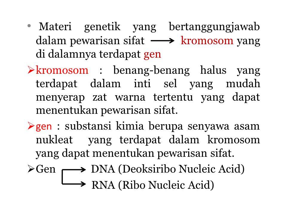 Materi genetik yang bertanggungjawab dalam pewarisan sifat kromosom yang di dalamnya terdapat gen  kromosom : benang-benang halus yang terdapat dalam