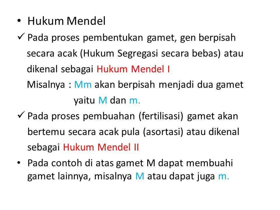 Hukum Mendel Pada proses pembentukan gamet, gen berpisah secara acak (Hukum Segregasi secara bebas) atau dikenal sebagai Hukum Mendel I Misalnya : Mm