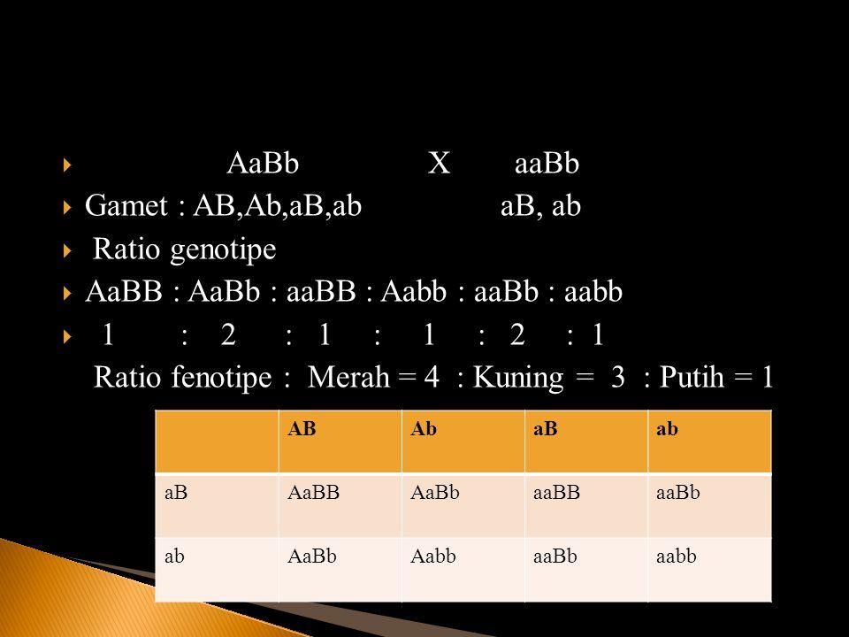  AaBb X aaBb  Gamet : AB,Ab,aB,ab aB, ab  Ratio genotipe  AaBB : AaBb : aaBB : Aabb : aaBb : aabb  1 : 2 : 1 : 1 : 2 : 1 Ratio fenotipe : Merah =