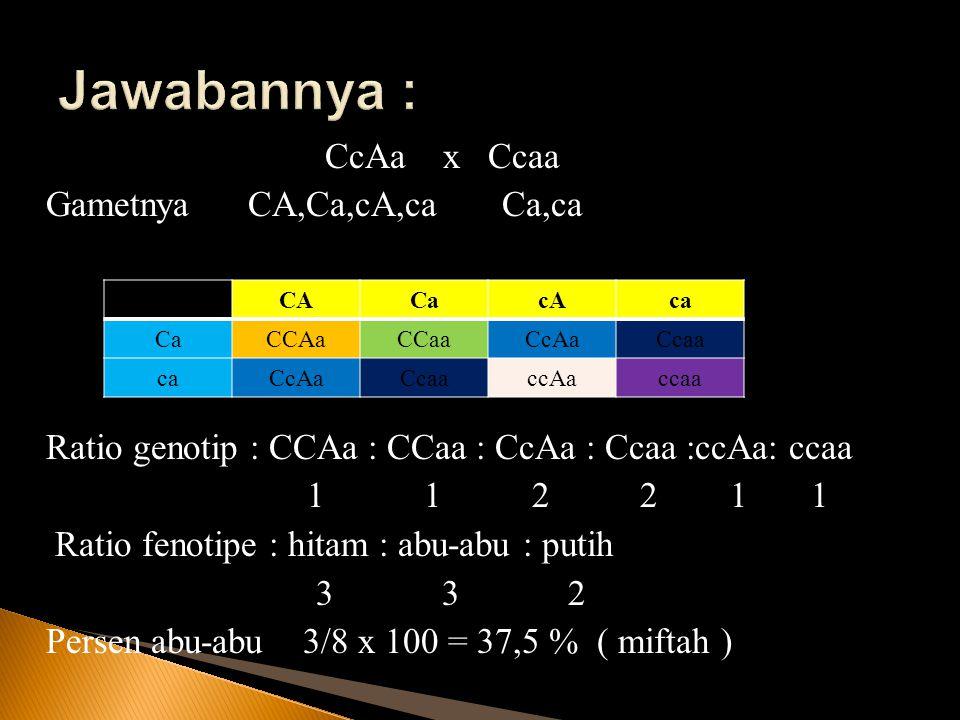 CcAa x Ccaa Gametnya CA,Ca,cA,ca Ca,ca Ratio genotip : CCAa : CCaa : CcAa : Ccaa :ccAa: ccaa 1 1 2 2 1 1 Ratio fenotipe : hitam : abu-abu : putih 3 3