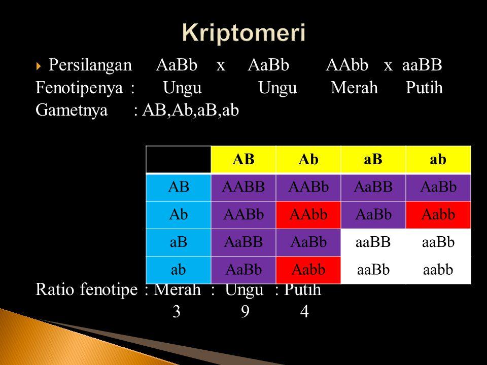  Persilangan AaBb x AaBb AAbb x aaBB Fenotipenya : Ungu Ungu Merah Putih Gametnya : AB,Ab,aB,ab Ratio fenotipe : Merah : Ungu : Putih 3 9 4 ABAbaBab