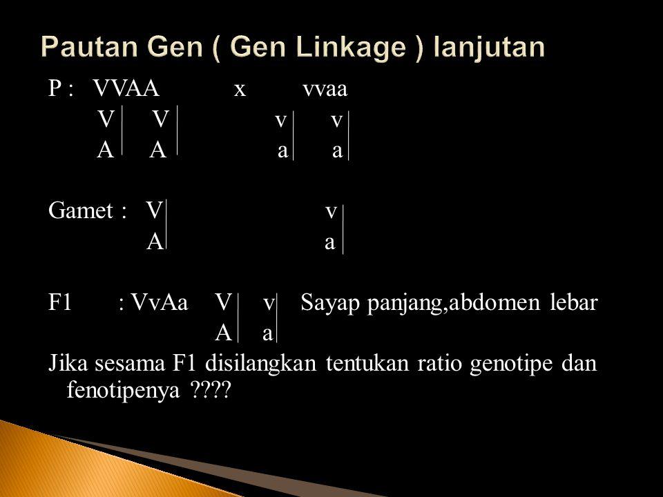 P : VVAA x vvaa V V v v A A a a Gamet : V v A a F1 : VvAa V v Sayap panjang,abdomen lebar A a Jika sesama F1 disilangkan tentukan ratio genotipe dan f