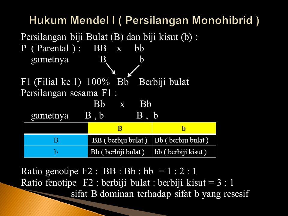 Persilangan biji Bulat (B) dan biji kisut (b) : P ( Parental ) : BB x bb gametnya B b F1 (Filial ke 1) 100% Bb Berbiji bulat Persilangan sesama F1 : B