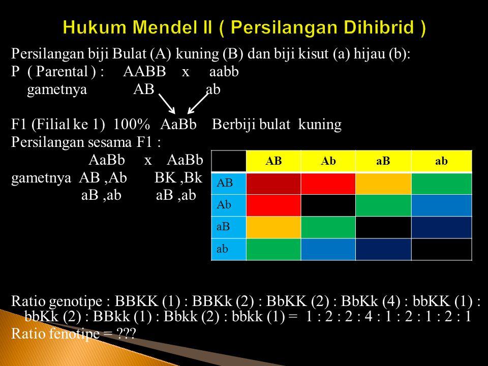 Persilangan biji Bulat (A) kuning (B) dan biji kisut (a) hijau (b): P ( Parental ) : AABB x aabb gametnya AB ab F1 (Filial ke 1) 100% AaBb Berbiji bul