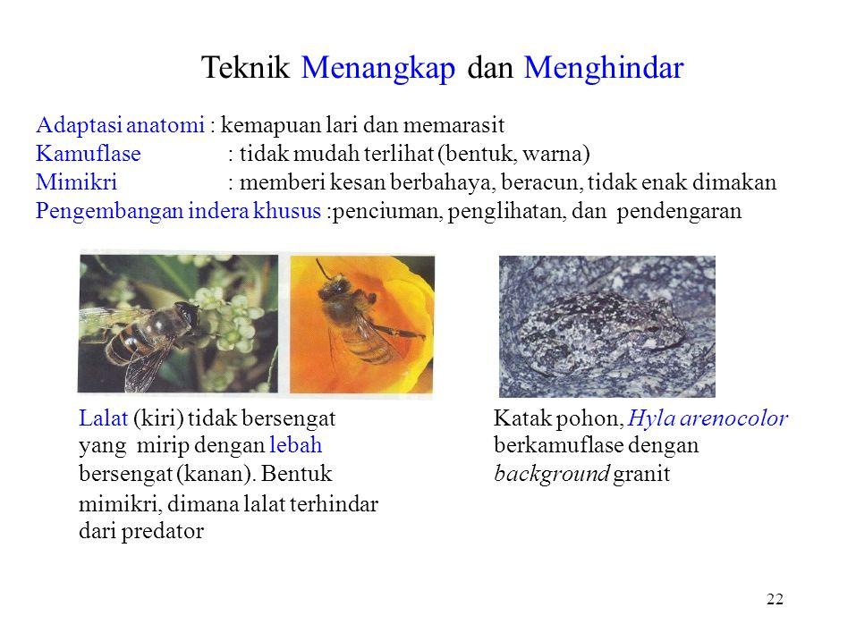 Teknik Menangkap dan Menghindar Adaptasi anatomi : kemapuan lari dan memarasit Kamuflase: tidak mudah terlihat (bentuk, warna) Mimikri: memberi kesan berbahaya, beracun, tidak enak dimakan Pengembangan indera khusus :penciuman, penglihatan, dan pendengaran Lalat (kiri) tidak bersengat yang mirip dengan lebah bersengat (kanan).